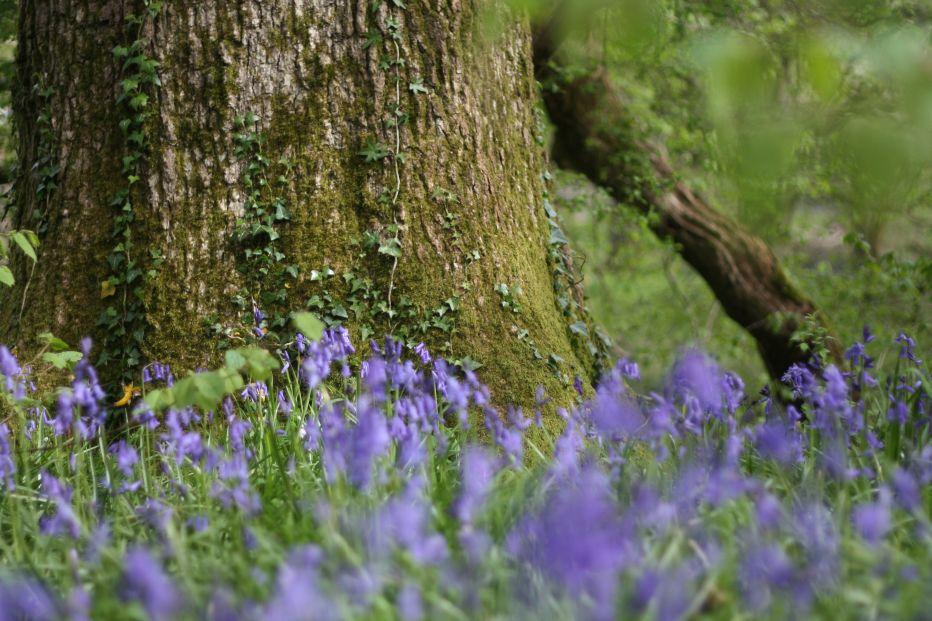 ancient woodland / Richard Cobden